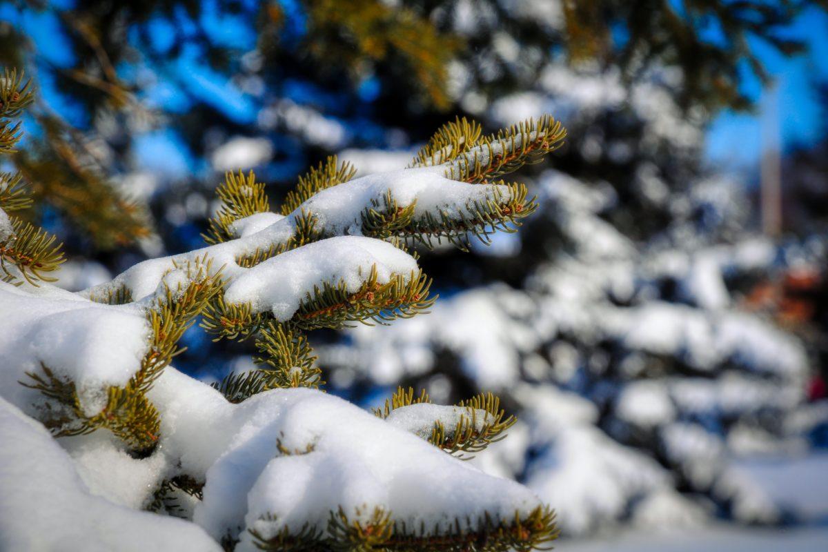 Winter Wonderland – First big dose of Winter